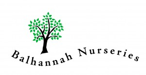 BALHANNAH LOGO Black tree